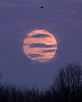 Moon rise, Pole Farm, Mercer county, NJ
