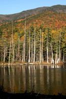 Beaver pond, foot of Whiteface, Wilmington, NY